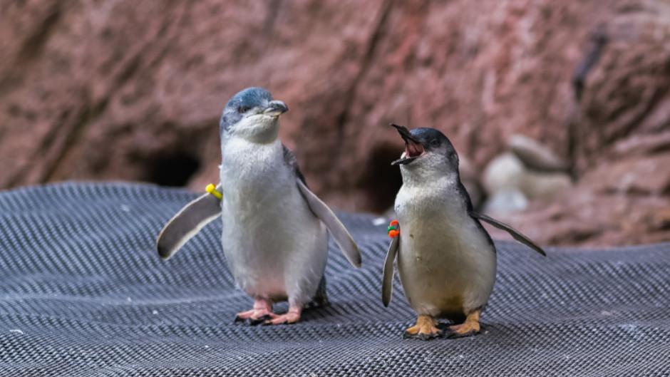 Antarctic Centre Penguins