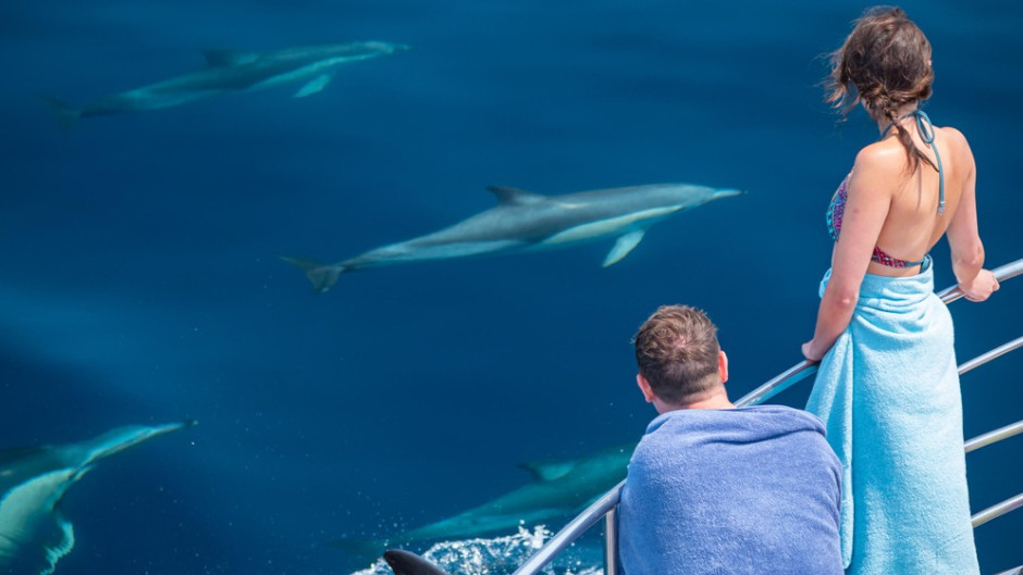 Dolphin Sightseeing Tour Deals
