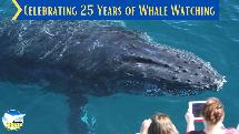 Whale Watching Cruise with Spirit Of Gold Coast