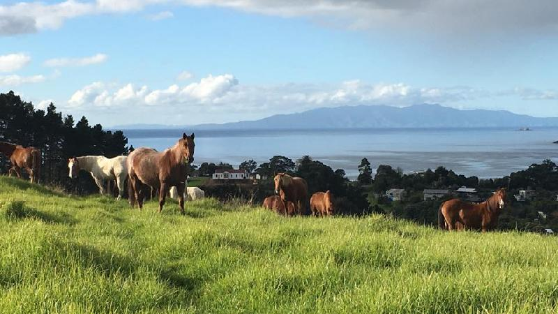 Guided farm trek with breath taking views over Waiheke Island, the Hauraki Gulf and beyond
