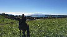 1 hour Waiheke horse trek
