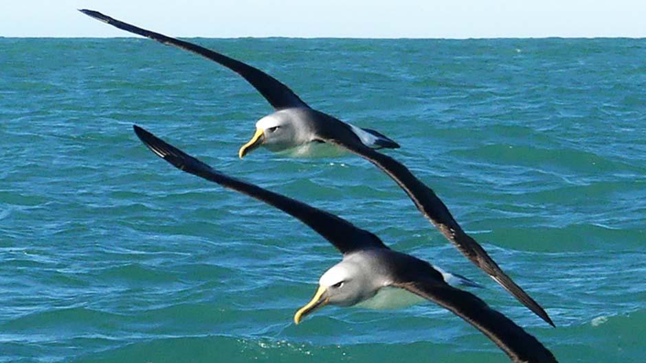 Akaroa Scenic Wildlife Cruises - Deals
