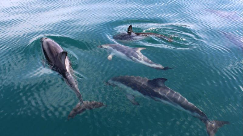 Embark on an unforgettable Wildlife Cruise to experience an amazing insight into New Zealand's little-known whaling history while spotting local wildlife along the way!