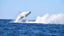 Noosa Whale Watching Adventure