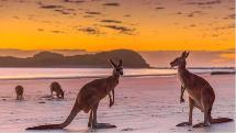 Sunrise and Breakfast With Kangaroos on the Beach - Departs Airlie Beach