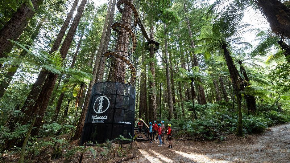 Redwoods Treewalk Deals Rotorua