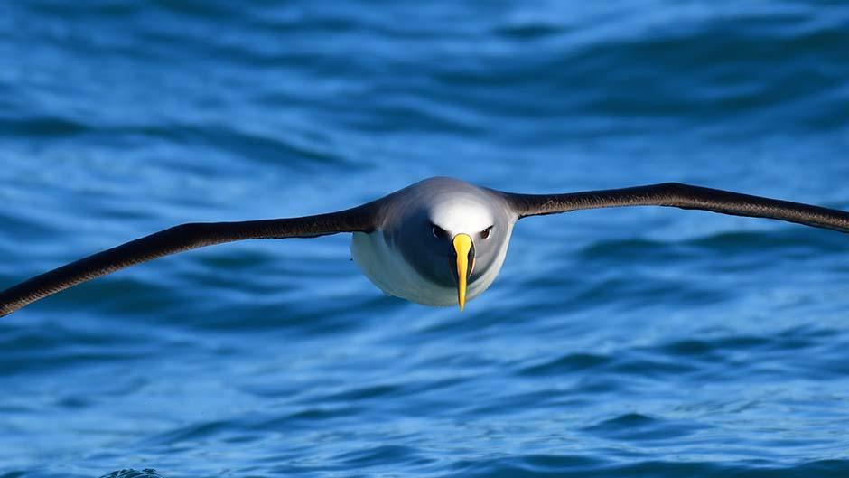 Coast Up Close Wildlife Tours - Akaroa
