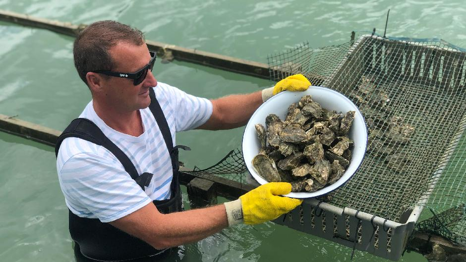 Learn to shuck Oysters (and eat them)!