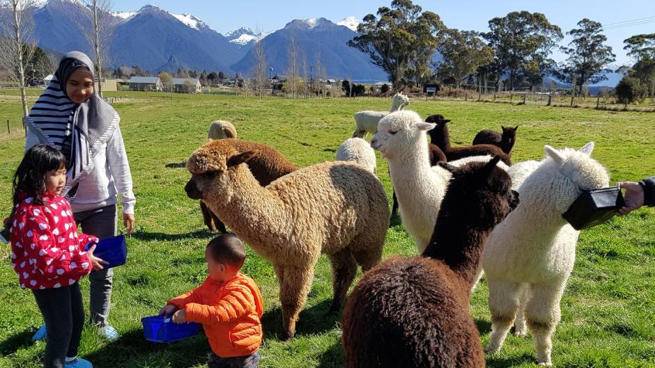 Kepler Mountain View Alpacas Deals