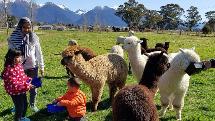 Alpaca Farm Tour - Kepler Mountain View Alpacas