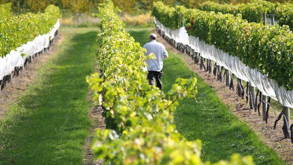 Wine Tour - Tour Napier deals