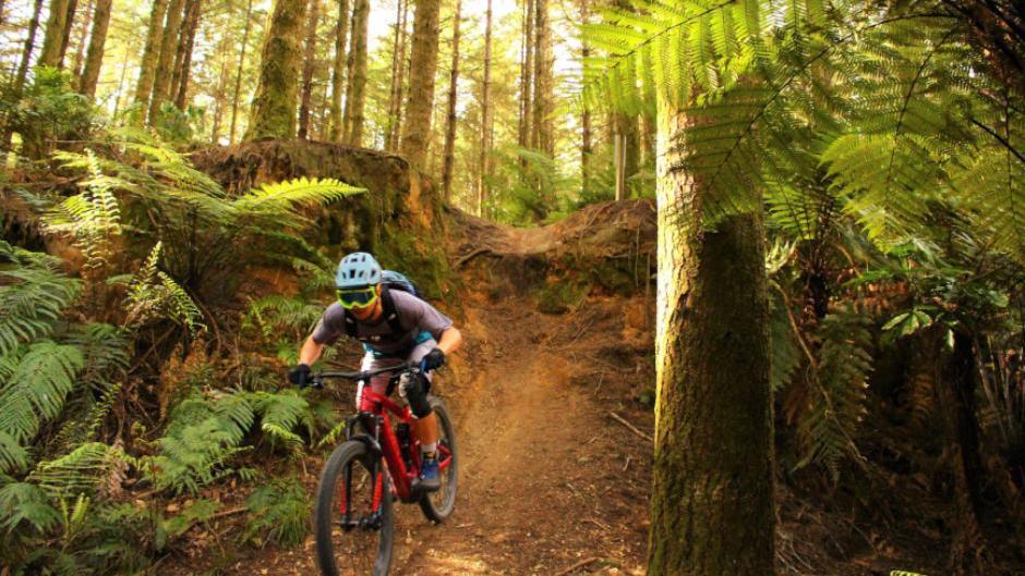 E-Bike Hire Deals Rotorua