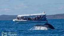 Hervey Bay - Whale Search
