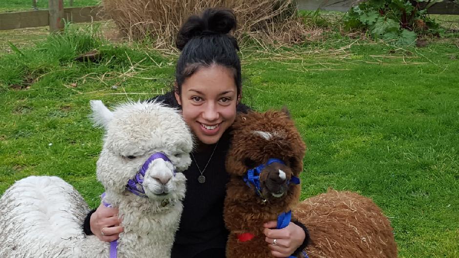 classic alpaca farm