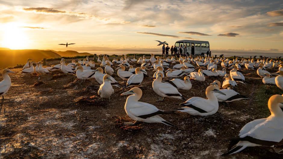 gannet safaris overload