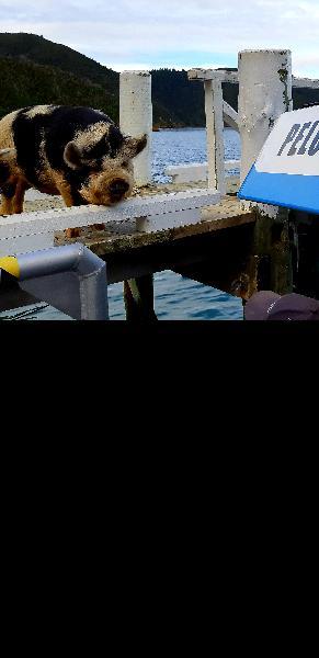 Mailboat Pelorus Sound