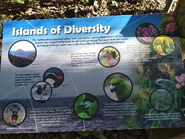 Real kiwi experience