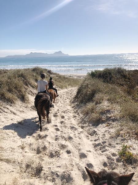 90 minute horse trakking