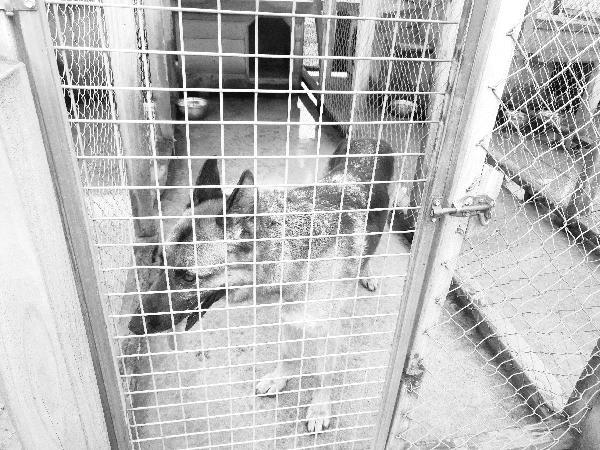 Awesome Siberian Huskies experience!