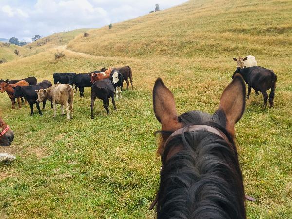 beautuful horses, stunning scenery, great fun!