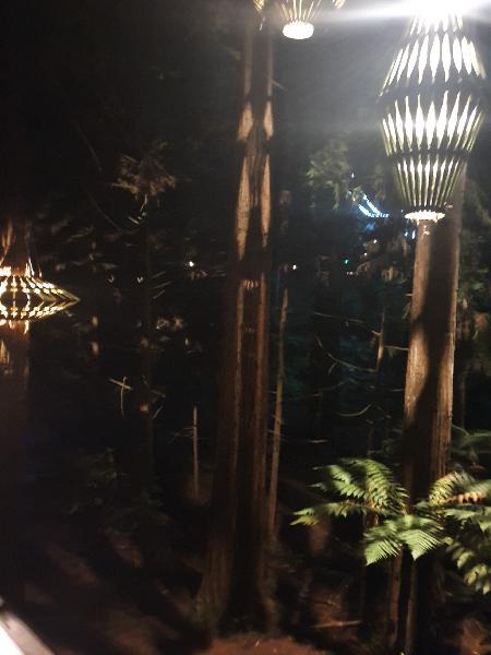 """Nightlights at redwood tree walk"""