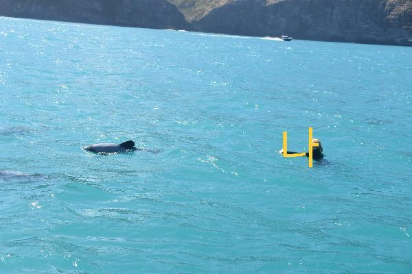 사랑스러운 돌고래와 수영하기!!