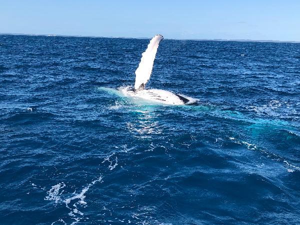 Whales aplenty