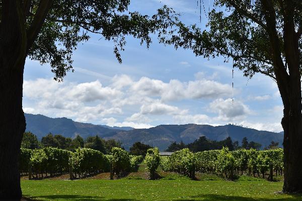 Hop On Hop Off Wineries