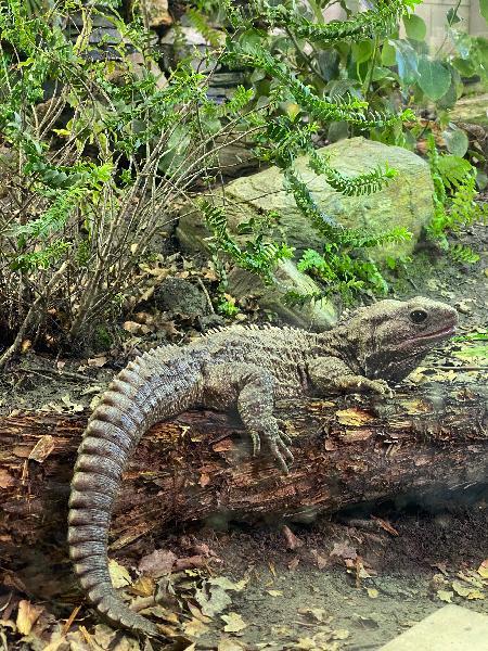 Kiwi wildlife Park
