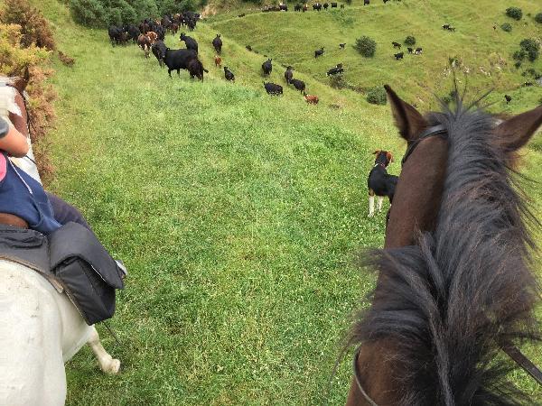 Stone Hill Horse Treks!