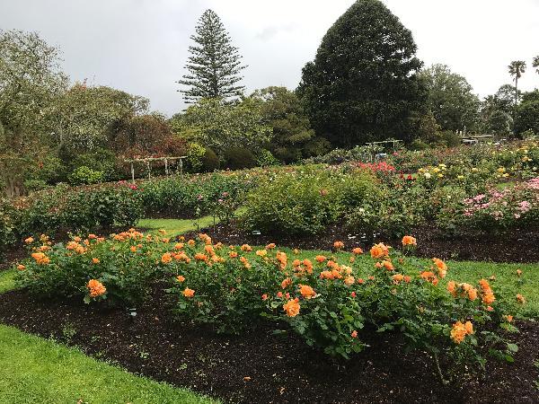 Winter garden stop and Parnell Rose Garden on 29 Oct 2018.