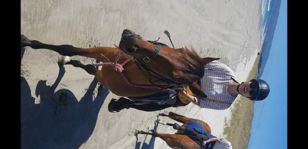 Best horse adventure in Waipu ever